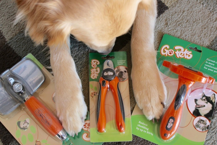 Beginner's Guide to Purchasing the Right Dog Grooming Tools