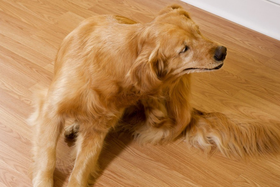 A Thorough Guide on Identifying and Treating Dog Skin Issues