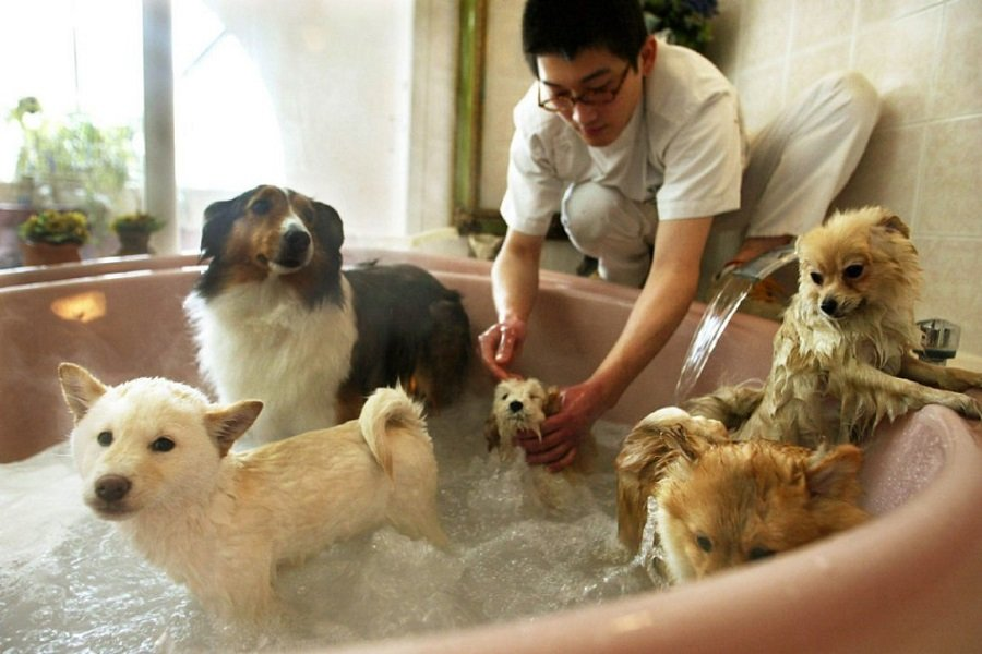 The Right Dog Grooming Supplies