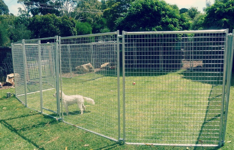 Safe Haven for dogs