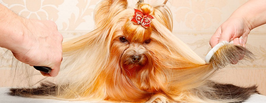 The Top Reasons Why You Should Groom Your Dog